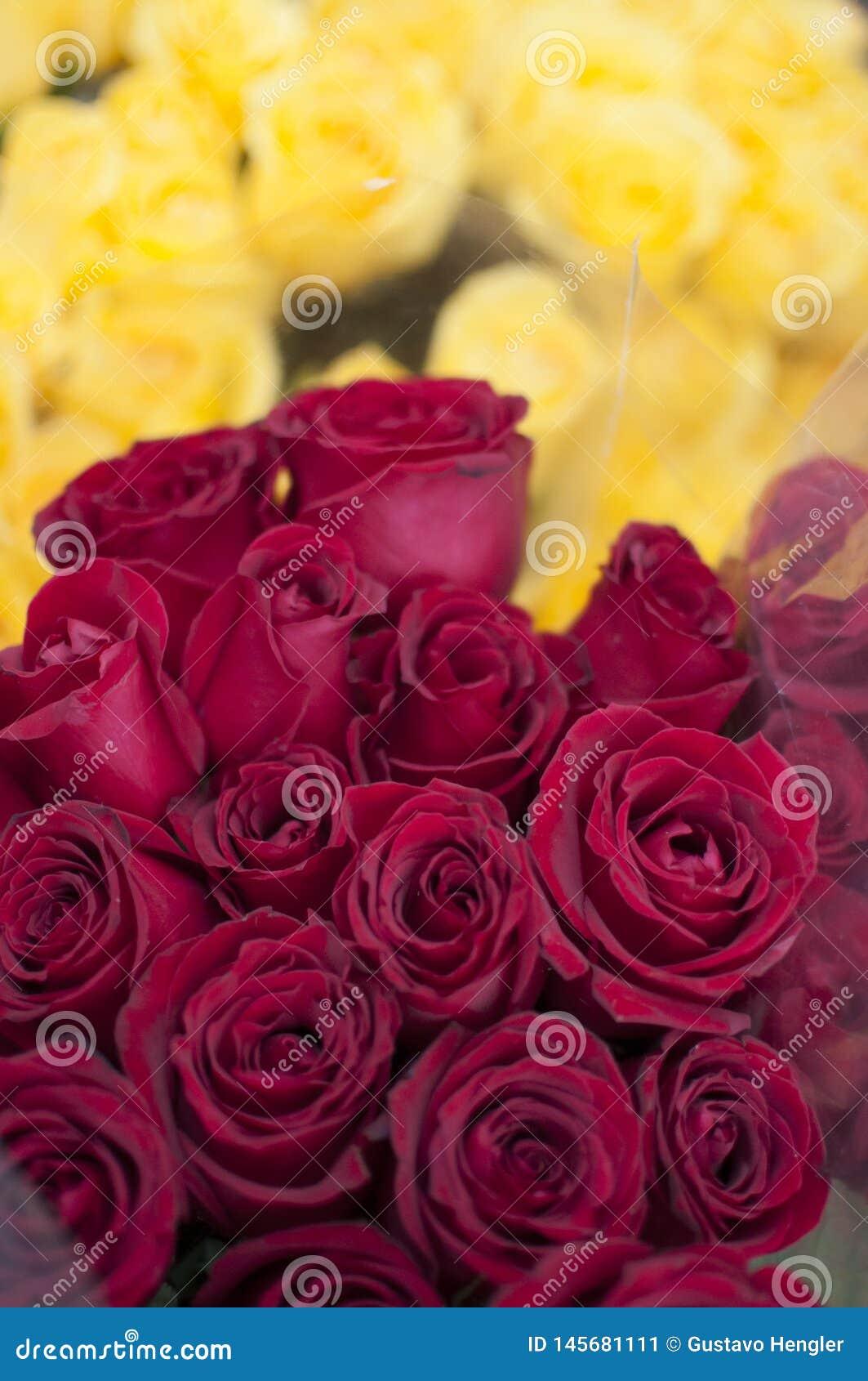 Pourpre de fleurs un jaune