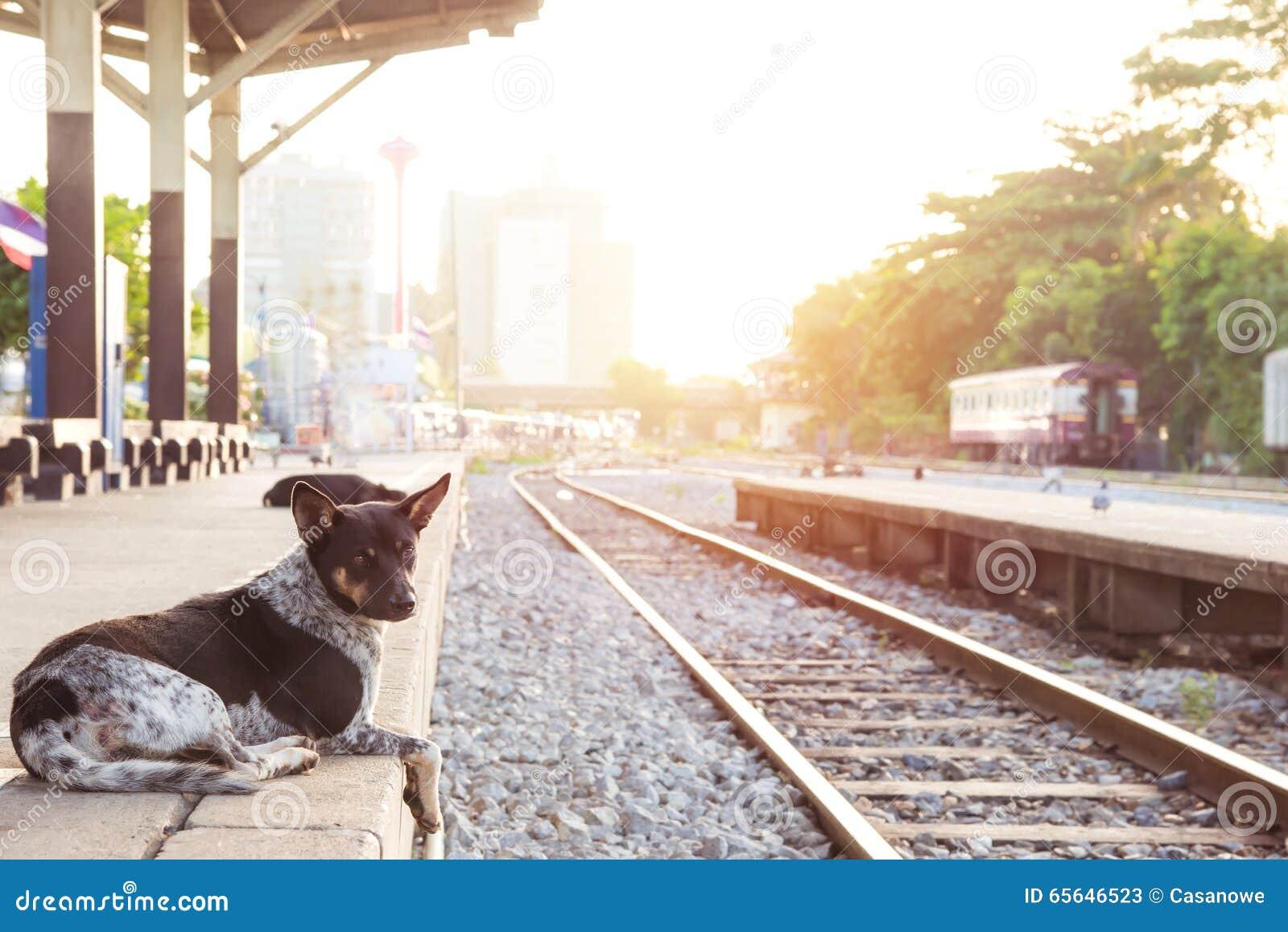 Poursuivez attendre son maître à la rétro station de train de vapeur