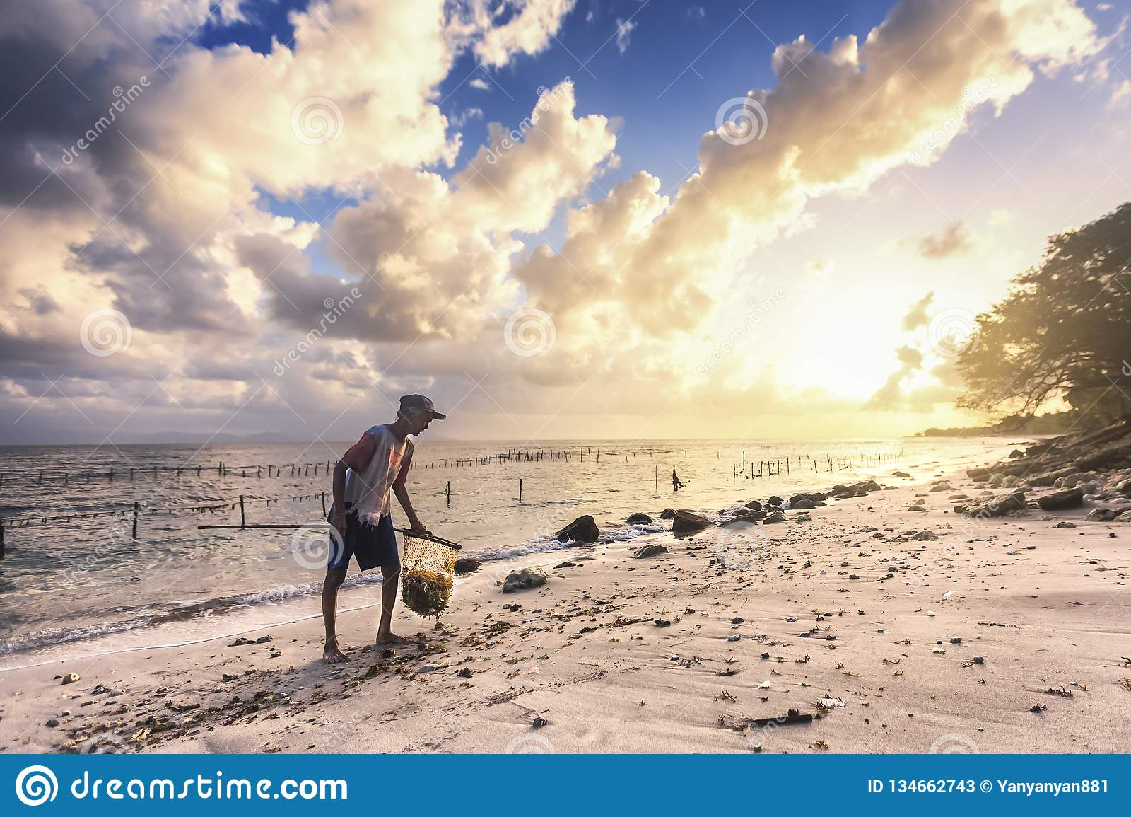 Poverty woman picks up seaweed along the beach in Bali, indonesia