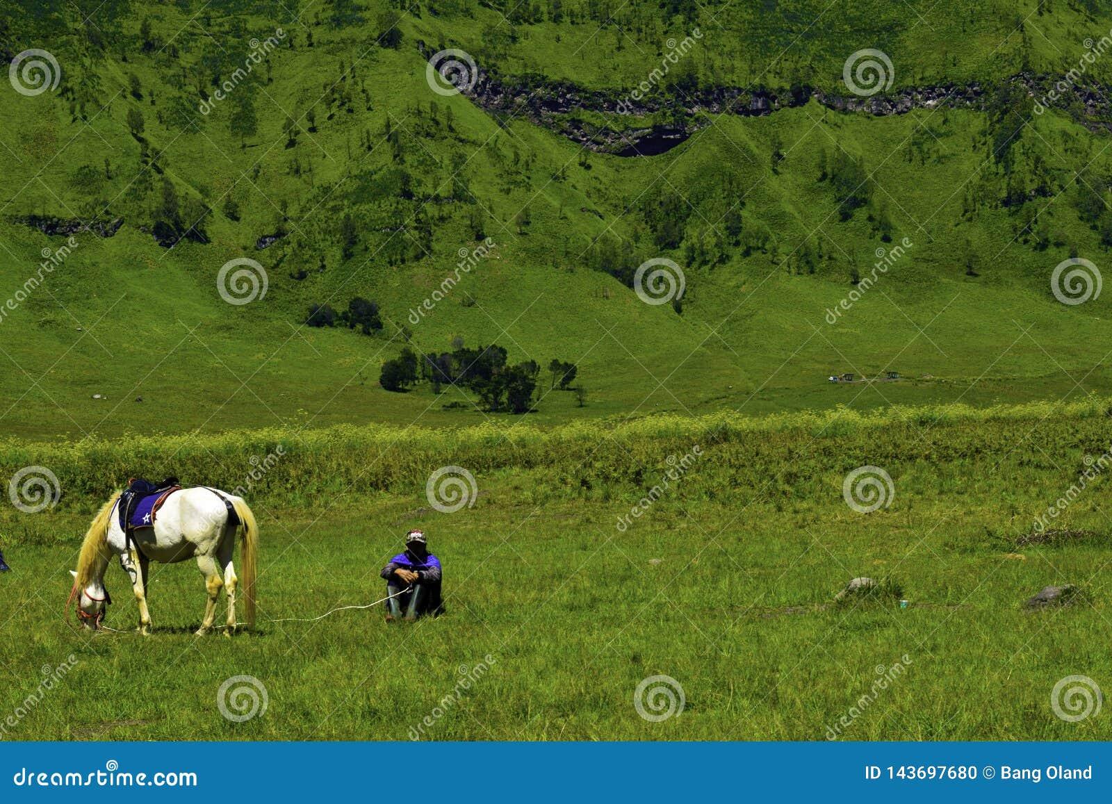Povos de Unreconized Ideia cênico de campo de grama verde de campos de exploração agrícola de rolamento do verde do campo com cav