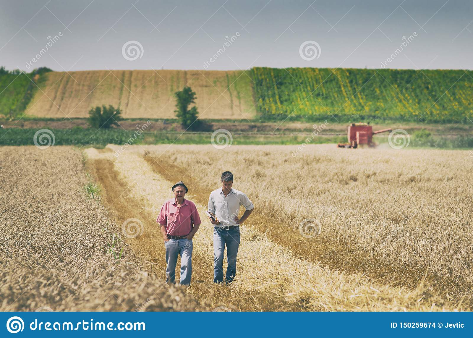 Povos na colheita