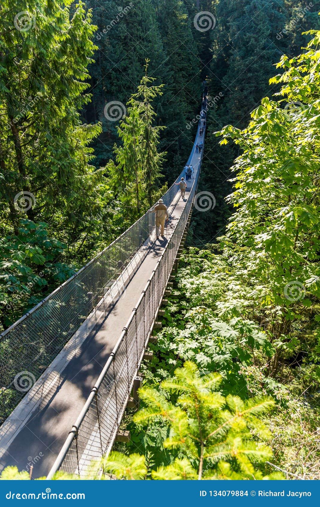 Povos na ponte de suspensão de Capilano entre árvores