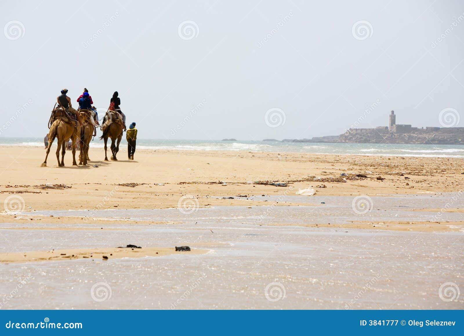 Povos no camelo na praia