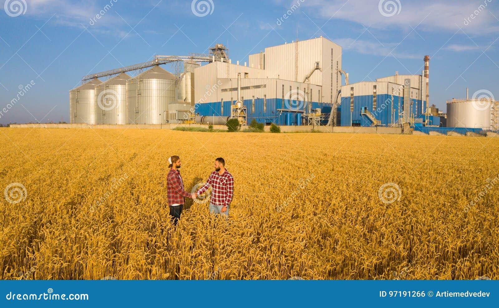 Povos que agitam as mãos em um campo de trigo, acordo do ` s do fazendeiro Terminal do elevador de grão no fundo Agrônomo da agri