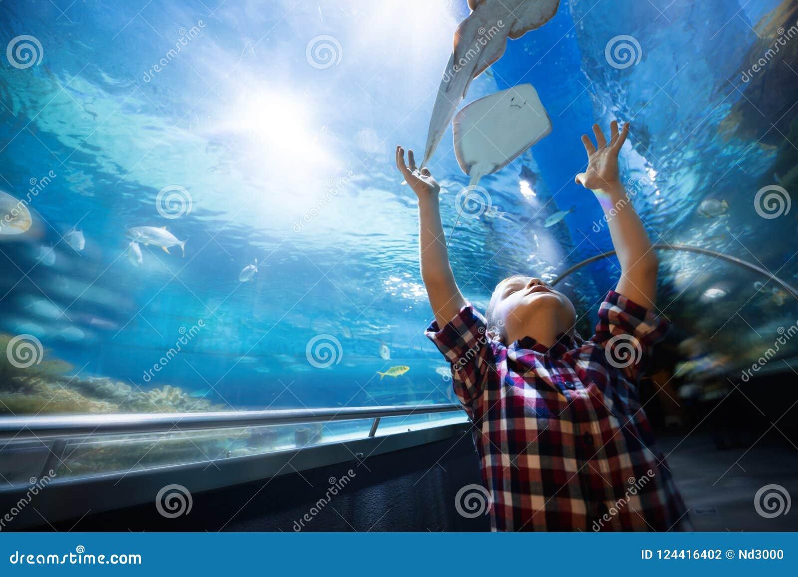 Poważna chłopiec patrzeje w akwarium z tropikalną ryba