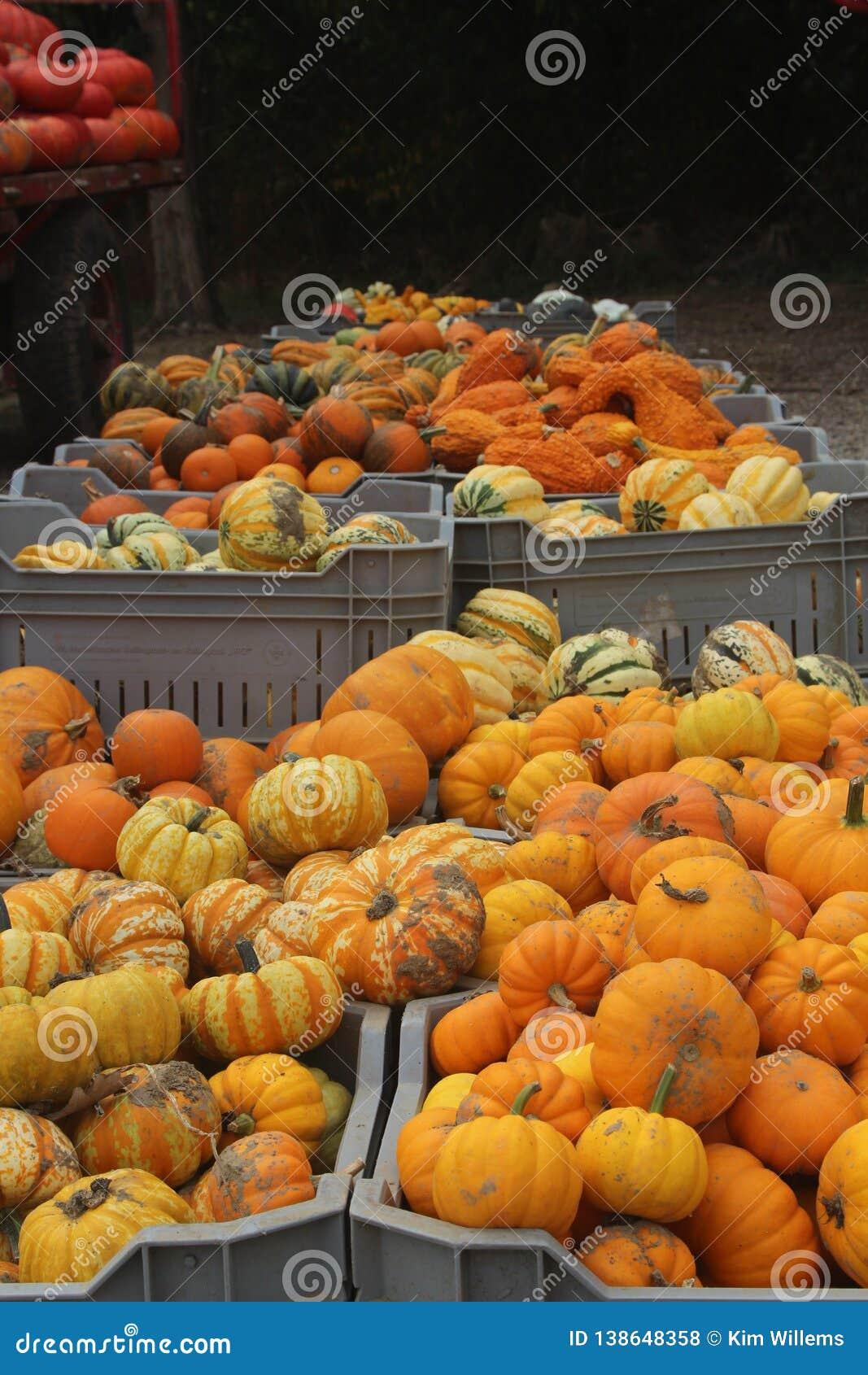 Power food with fresh pumpkins