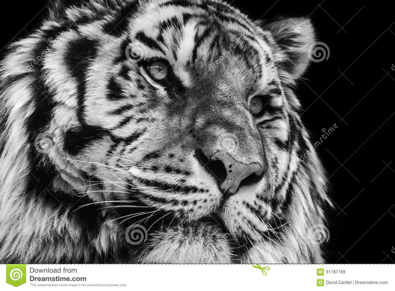 Powerful Black And White High Contrast Animal Portrait Of ...