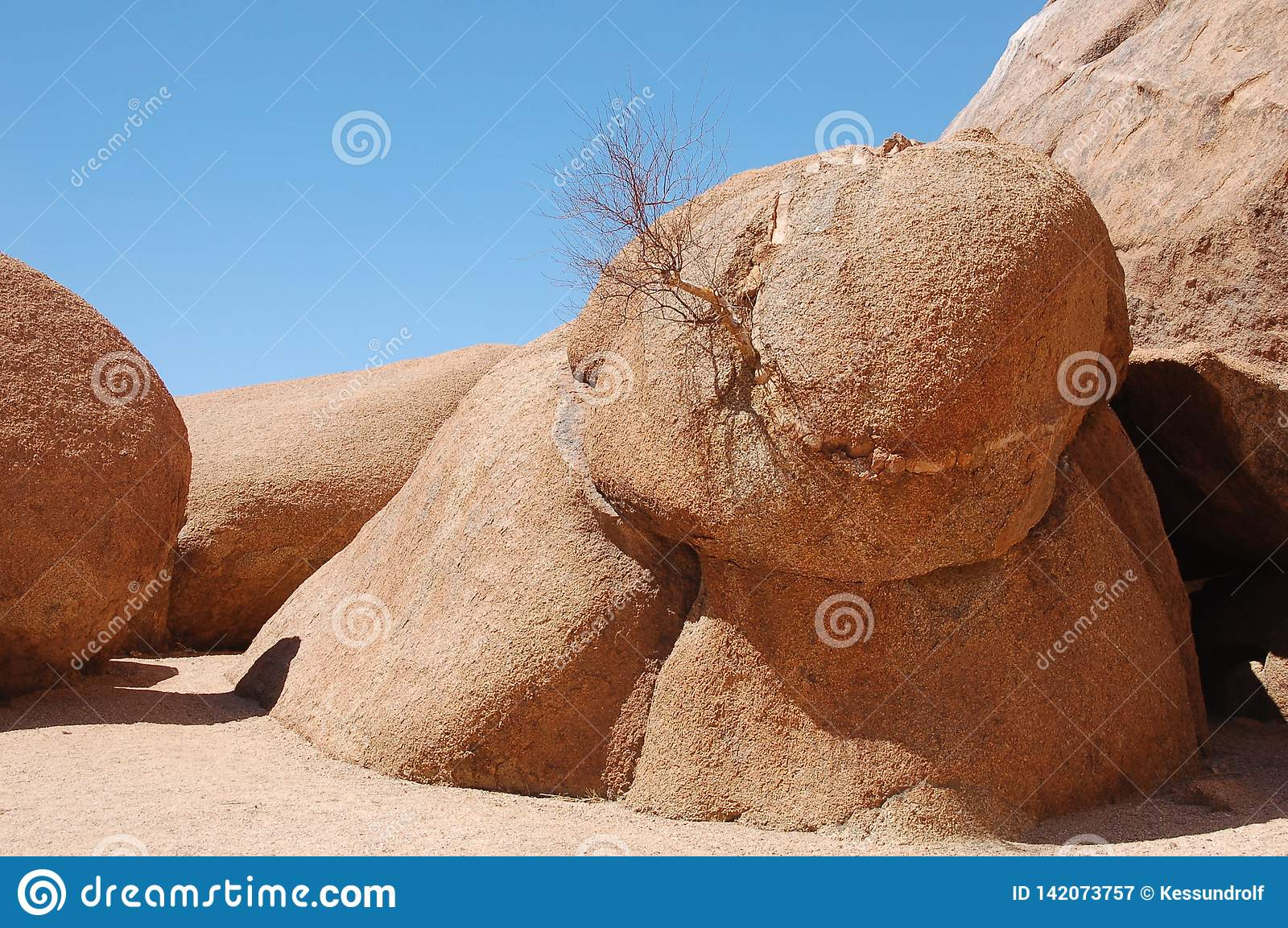 Tree growing on stone in arid climate, blue sky