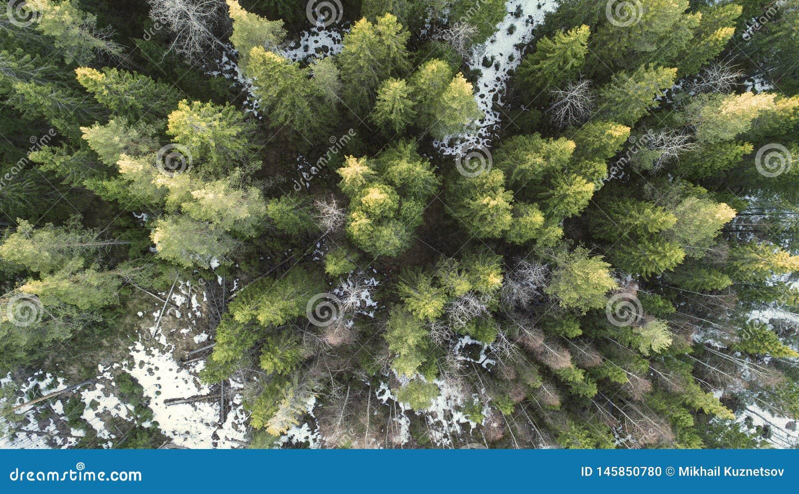 Powietrzna fotografia las w zimie