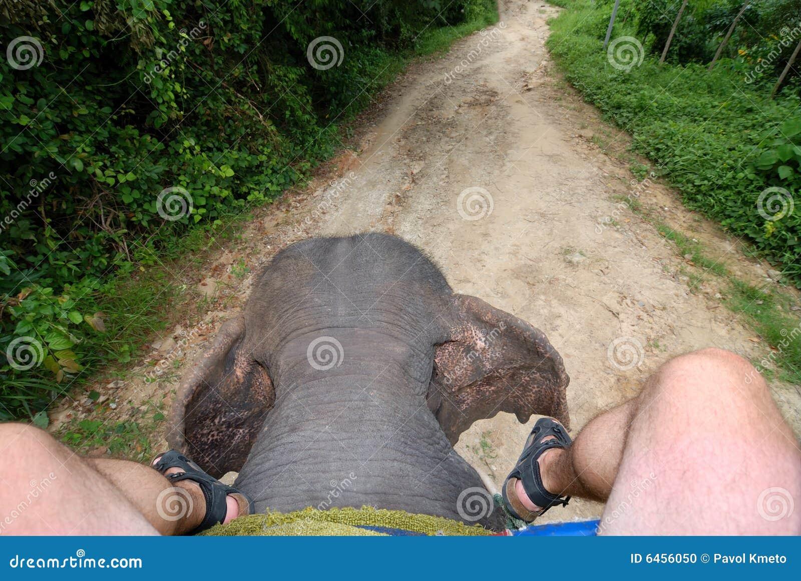 Pozbycie się słonia