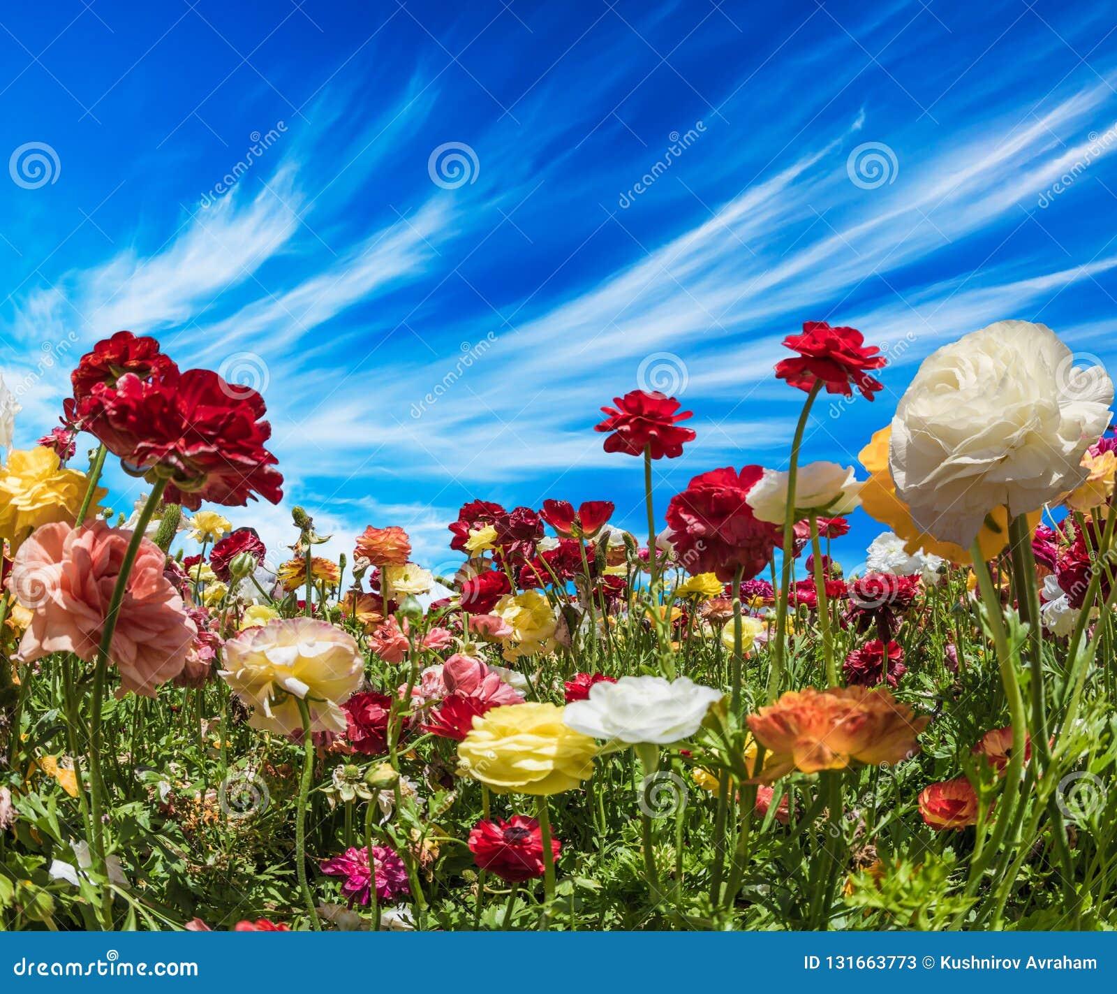 2007 pozdrowienia karty szczęśliwych nowego roku Piękny krajobraz  Południe Izrael, letni dzień Pojęcie