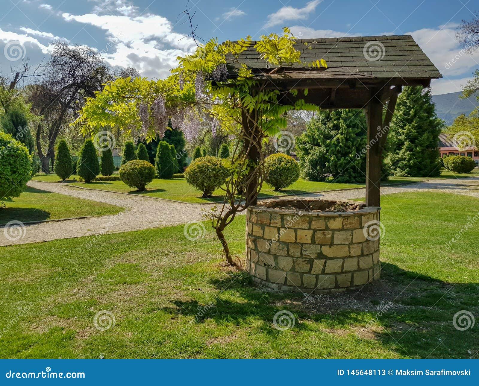Pozo de agua con el pequeño árbol que crece al lado de él en parque de la ciudad
