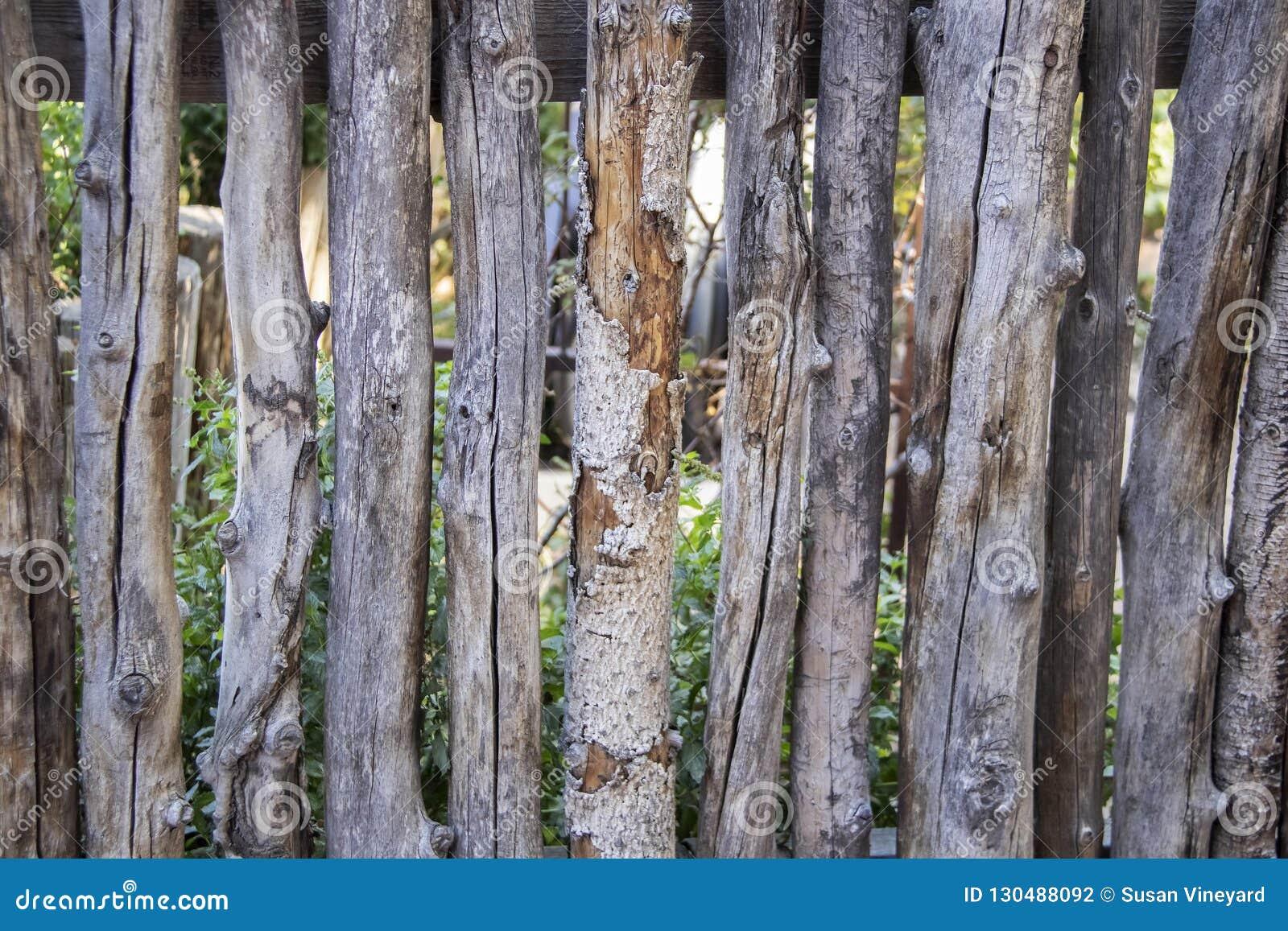 Prärievarg eller ond pinne som fäktar runt om en trädgård - närbild av grova trädpinnar som används som att fäkta, i att landskap