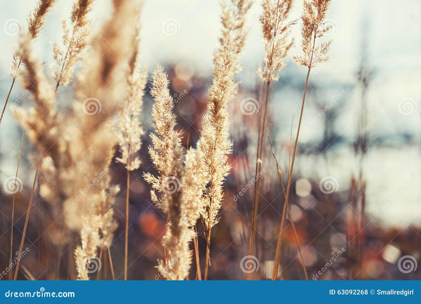 Download Pré De Forêt Avec Les Herbes Sauvages Au Coucher Du Soleil Photo stock - Image du macro, herbe: 63092268