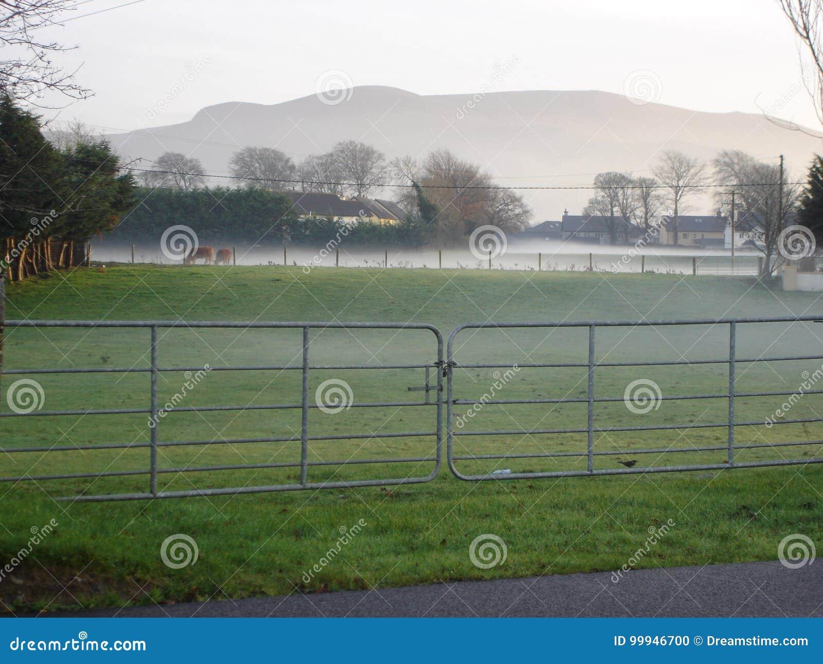 Pré de Killarney le matin d hiver