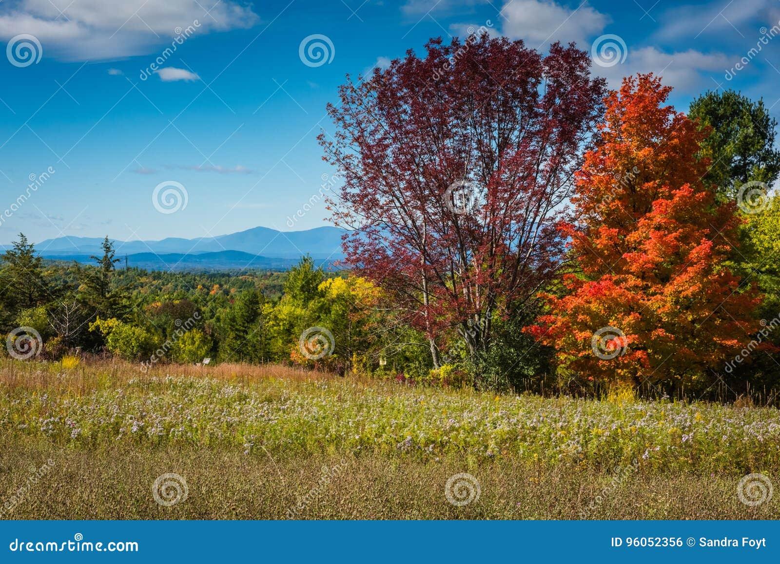 Pré de Wildflower dans les montagnes de Catskill