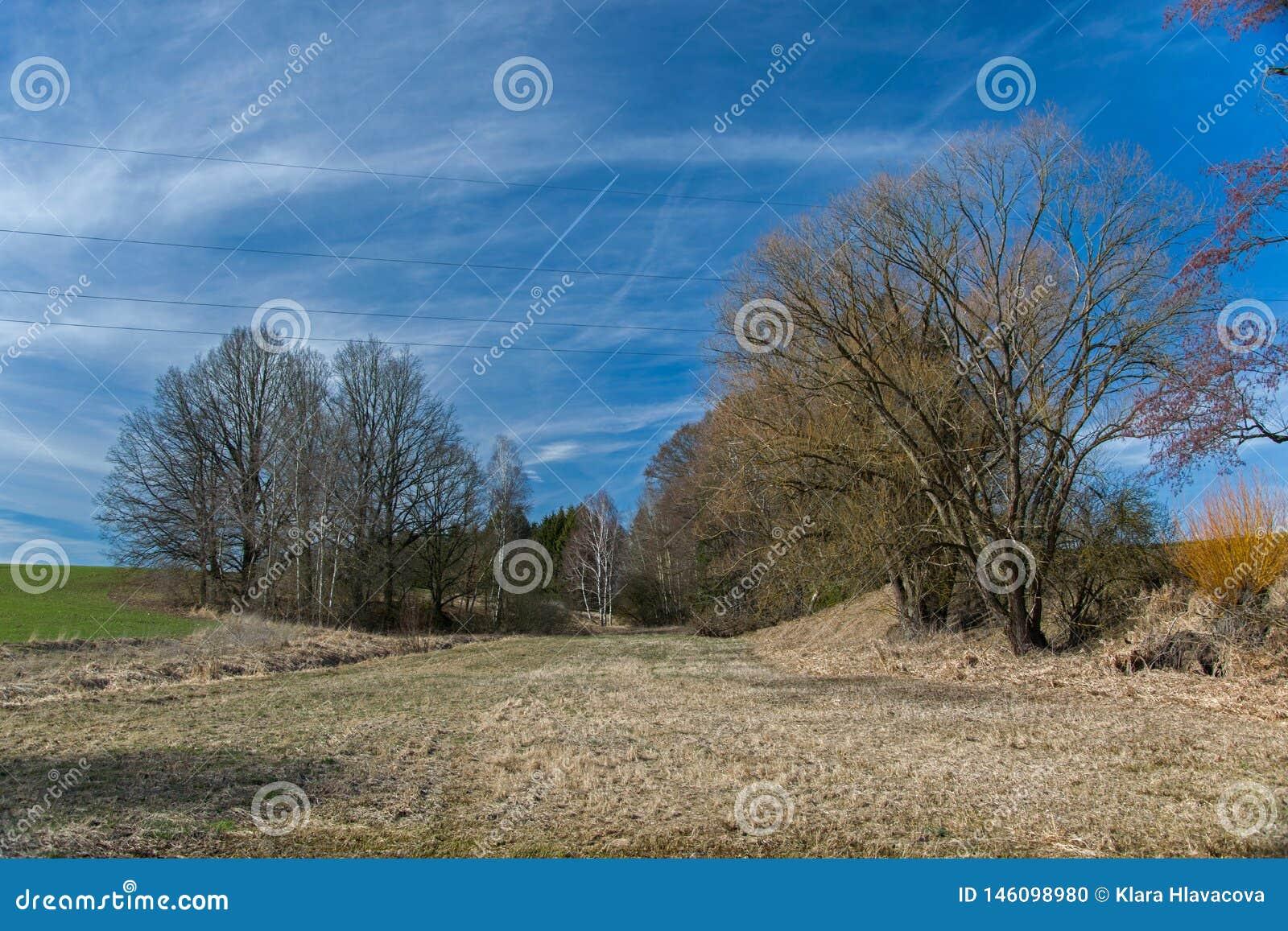 Pré entouré par des arbres un jour ensoleillé