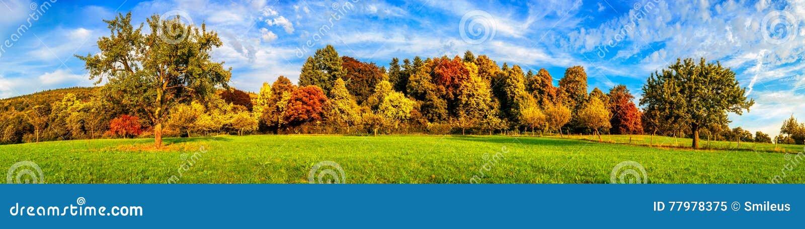 Pré et arbres colorés en automne