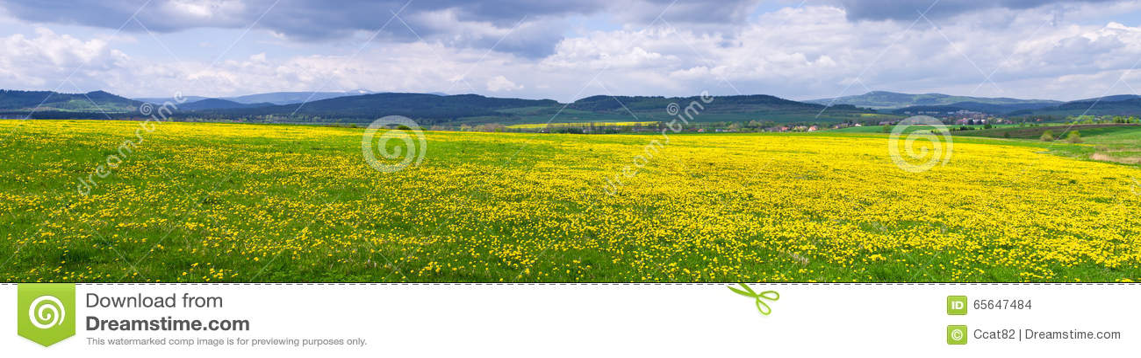 Pré fleuri frais dans les collines