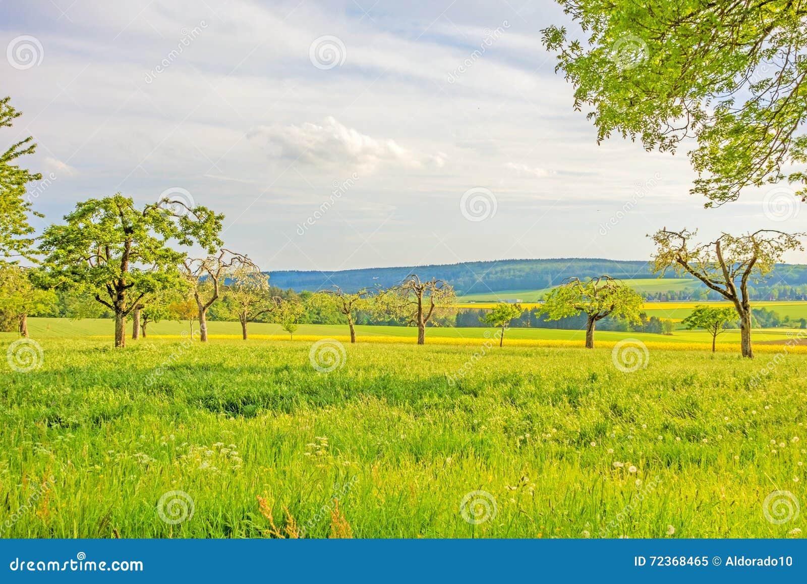 Pré vert avec les arbres fruitiers - paysage rural