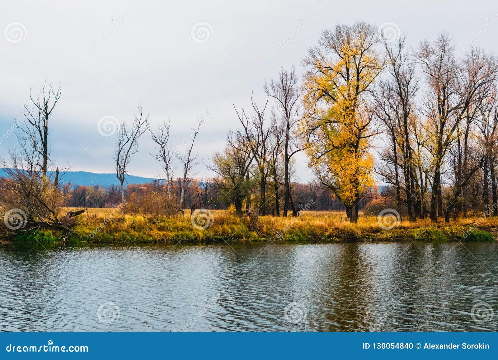 Prés de zone inondable de zone de forêt-steppe