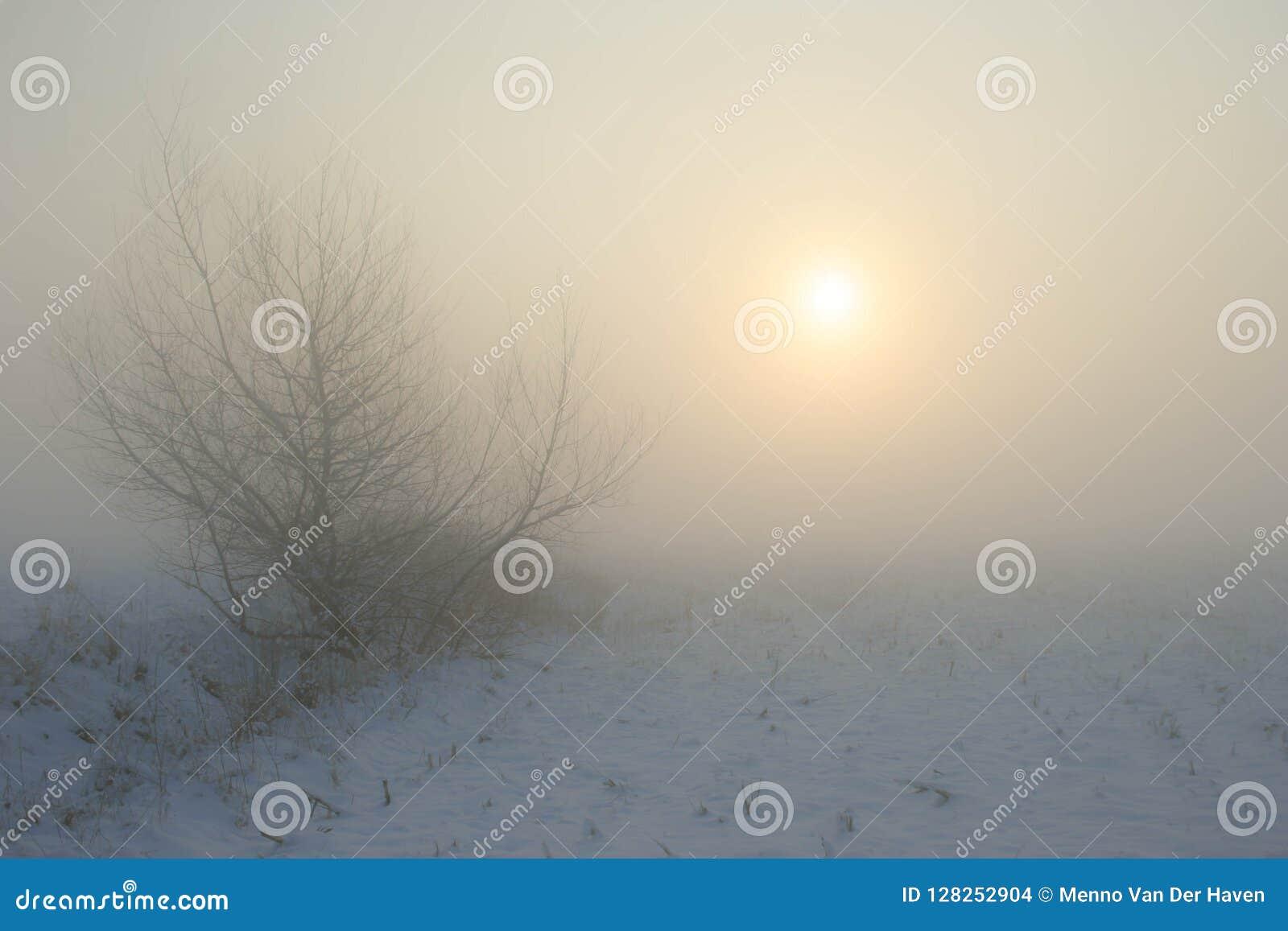 Próximo névoa do vale no por do sol