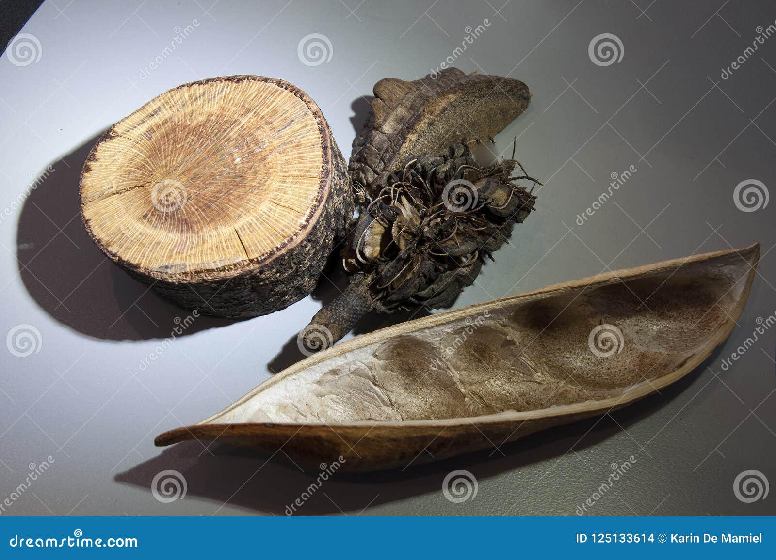 Prövkopior av växtmaterial för undersökning