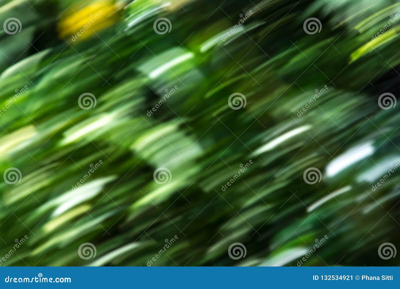 Prędkości natury abstrakta zieleni tła lasowi drzewa zamazujący