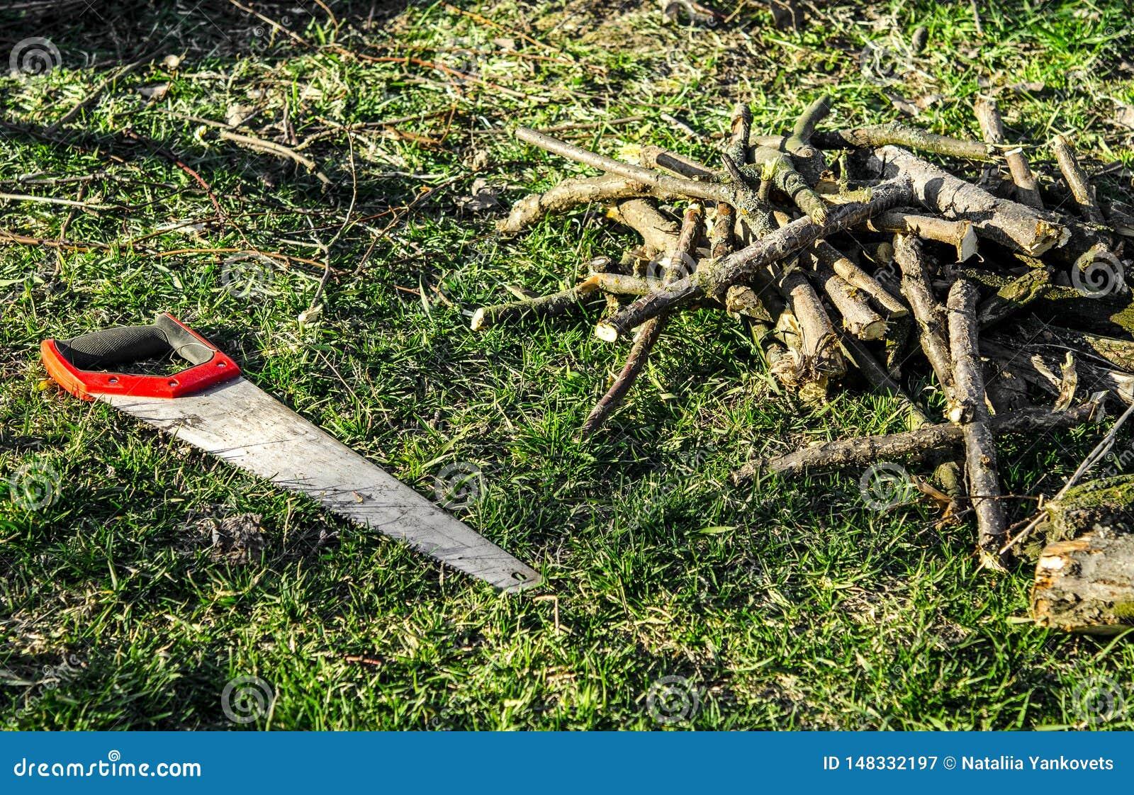 Prac? na ogr?d Ręka zobaczył z czerwonymi rękojeść odpoczynkami na zielonej trawie obok rżniętych gałąź