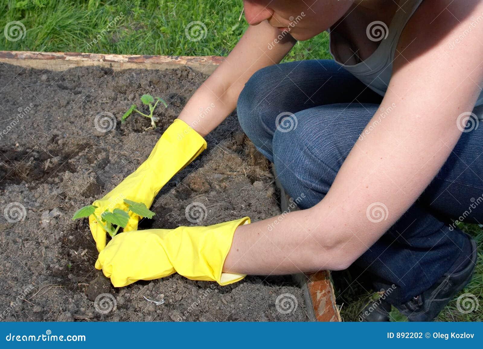 Praca ogrodowa