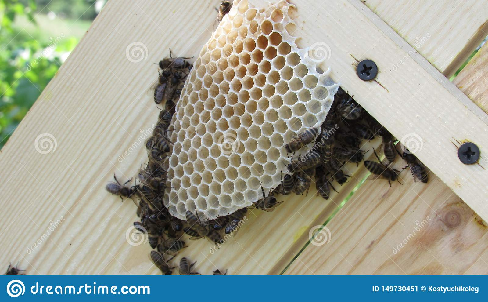 Praca pszczoły Pszczoły stwarzają ognisko domowe