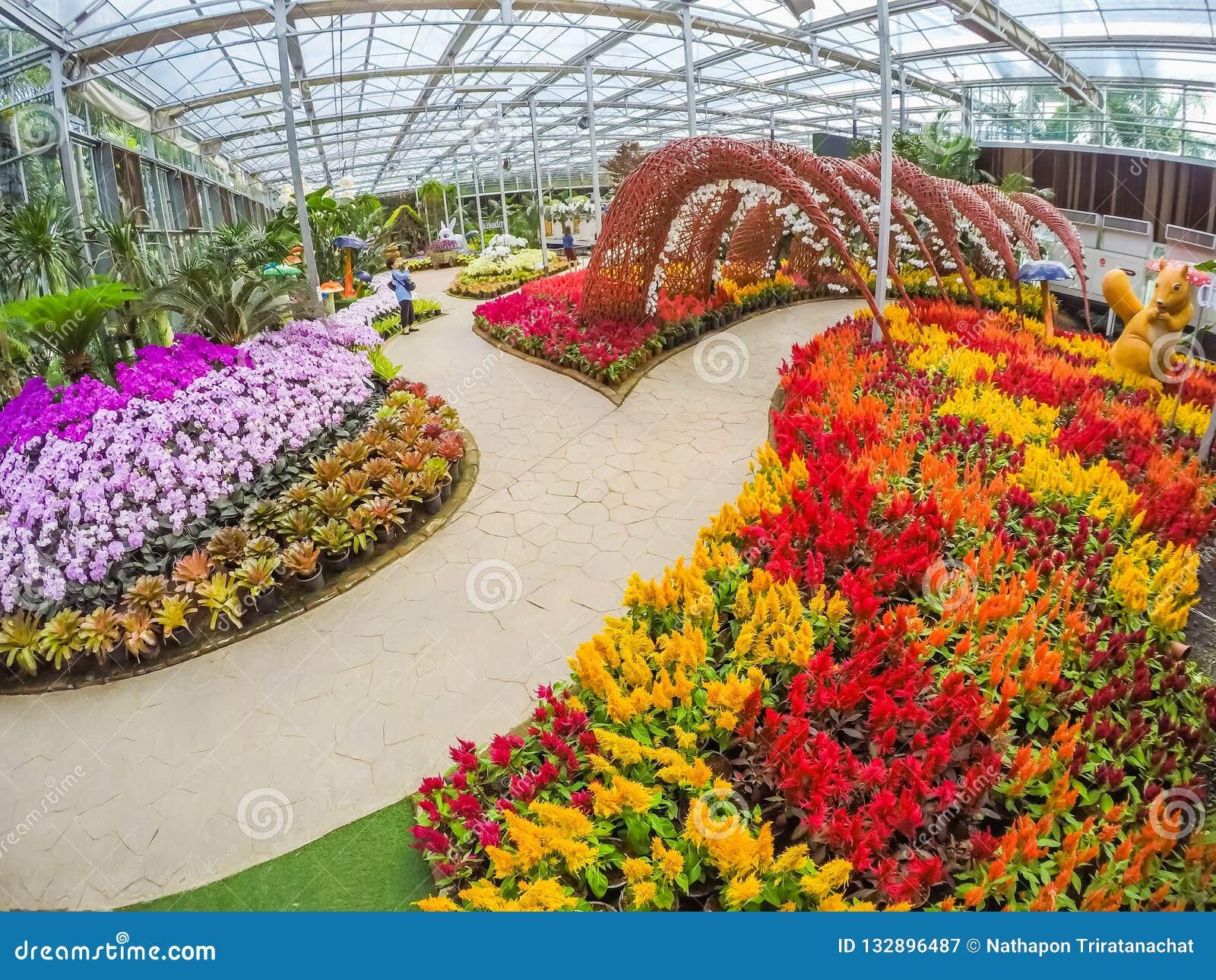Prachinburi,泰国January11,2018:在Dasada画廊的美好的花和植物显示