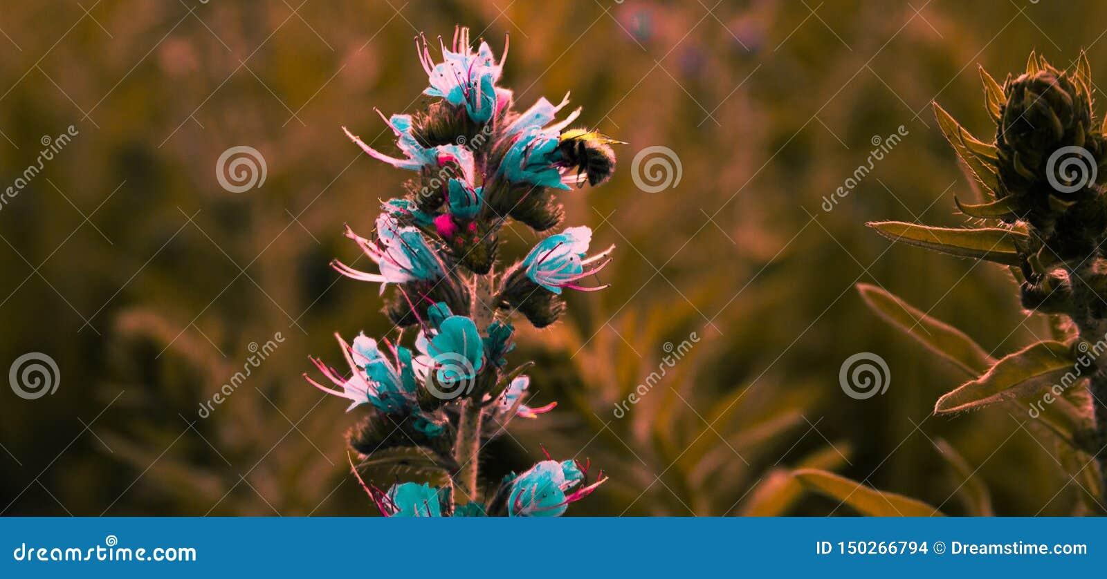 Prachtige bloem met een bij