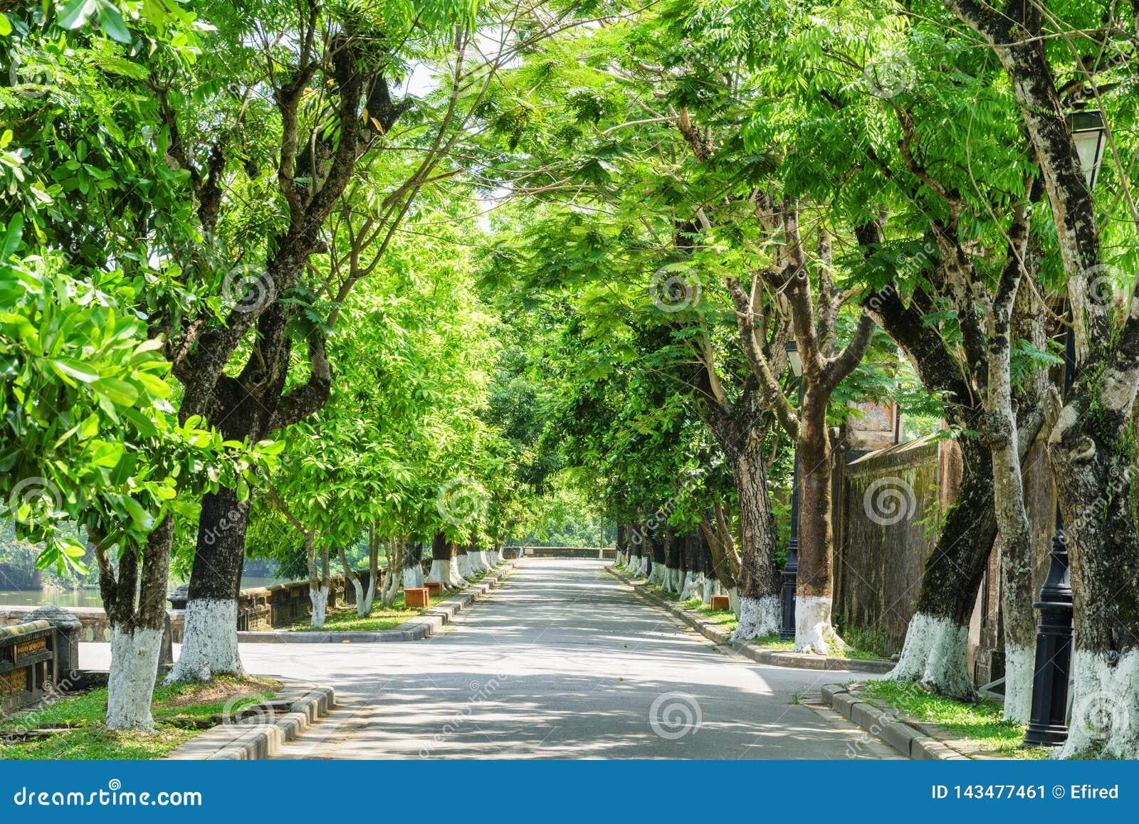 Prachtige groene schaduwrijke straat bij de Keizerstad, Tint, Vietnam