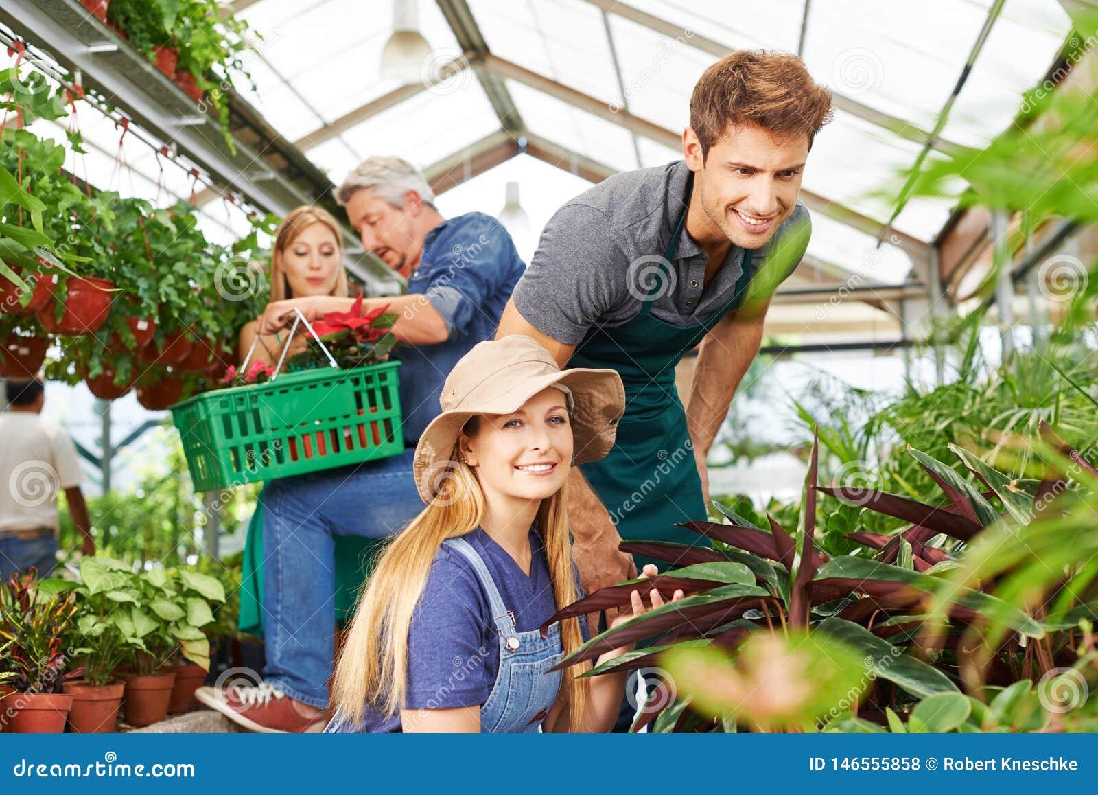 Pracownicy w ogrodowym centrum przy rośliną dbają
