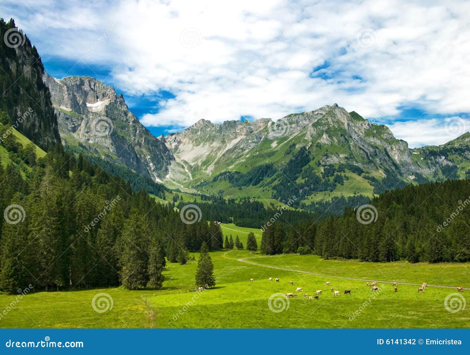 Prado alpestre en Suiza