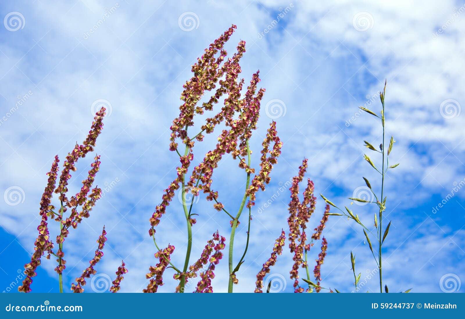 Download Prado Con La Hierba Verde Fresca Y Las Flores Salvajes Imagen de archivo - Imagen de maíz, floración: 59244737