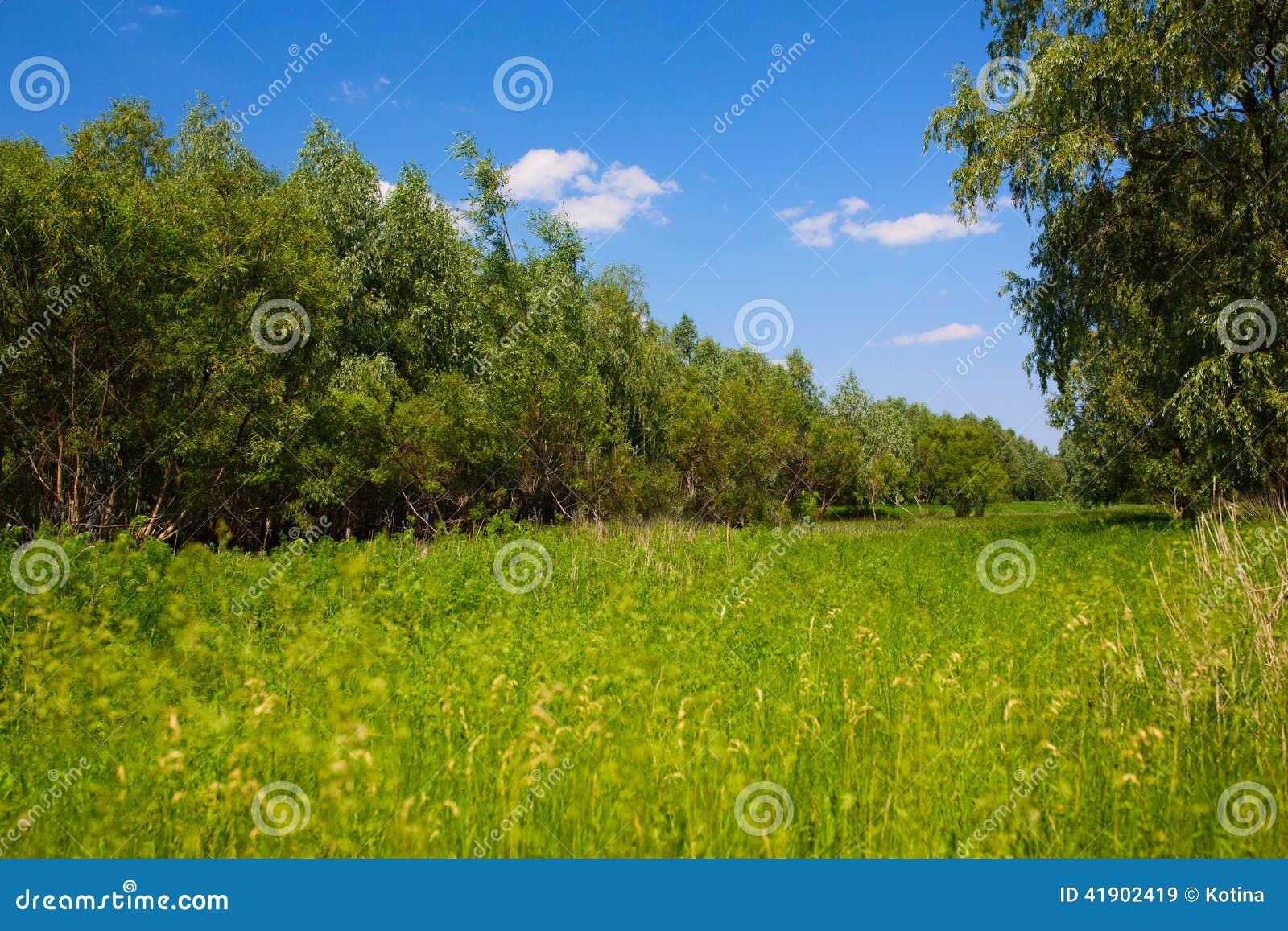 Prado con los árboles y el cielo azul brillante