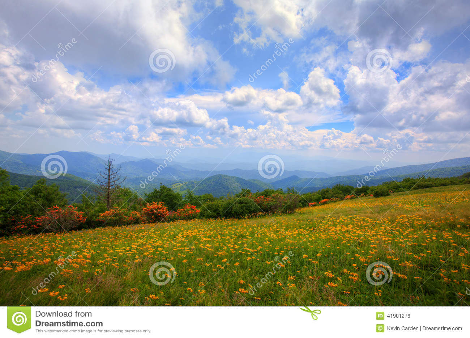 Prado de las montañas
