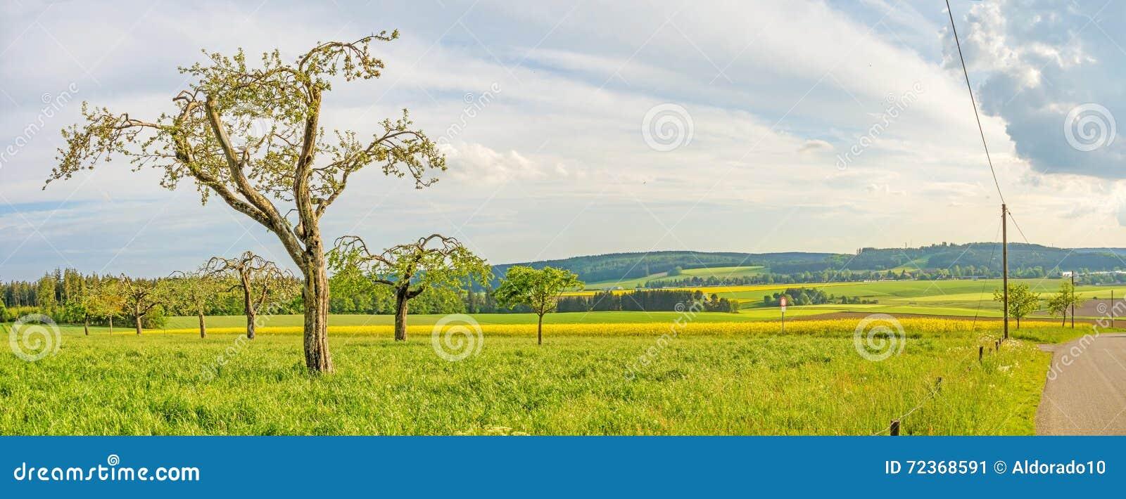 Prado verde com panorama das árvores de fruto - paisagem rural