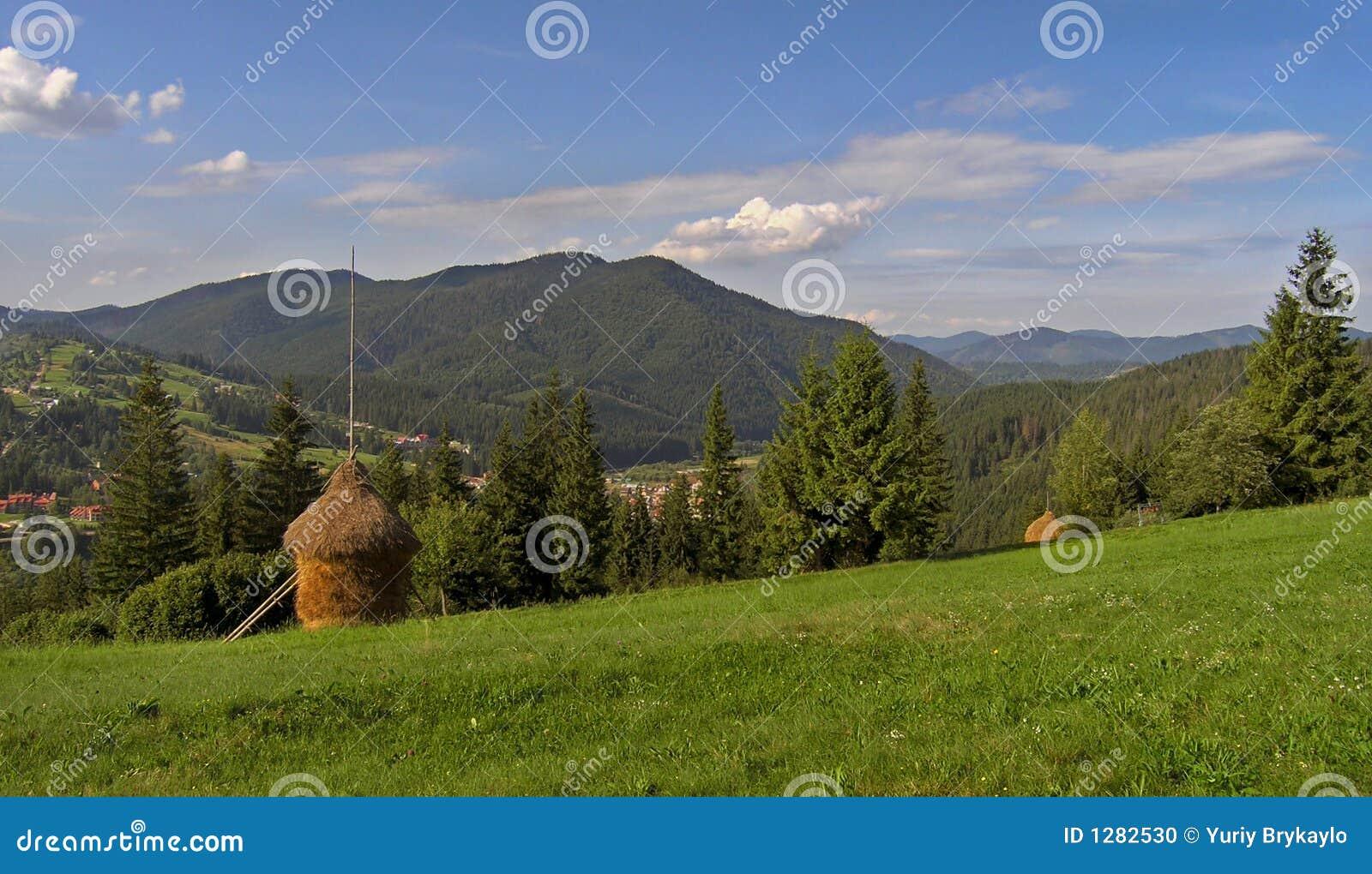 Prado verde montañoso 1
