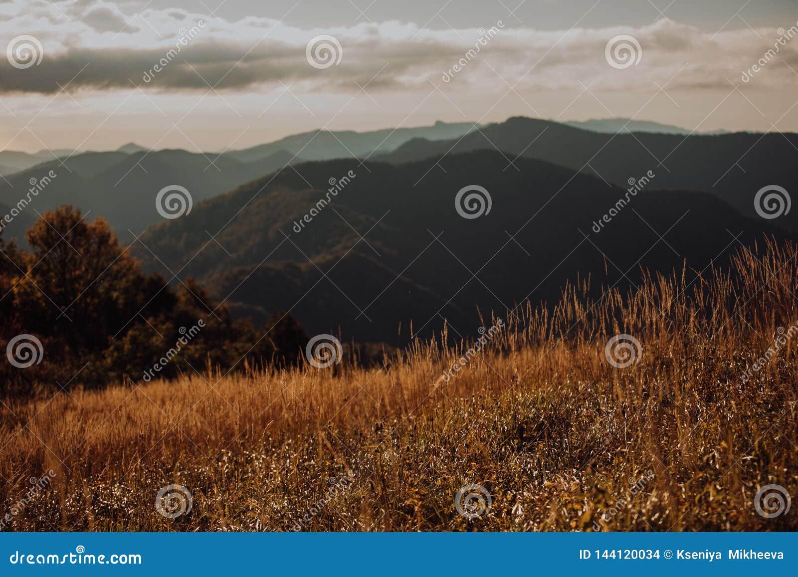Prado verde no fundo das montanhas