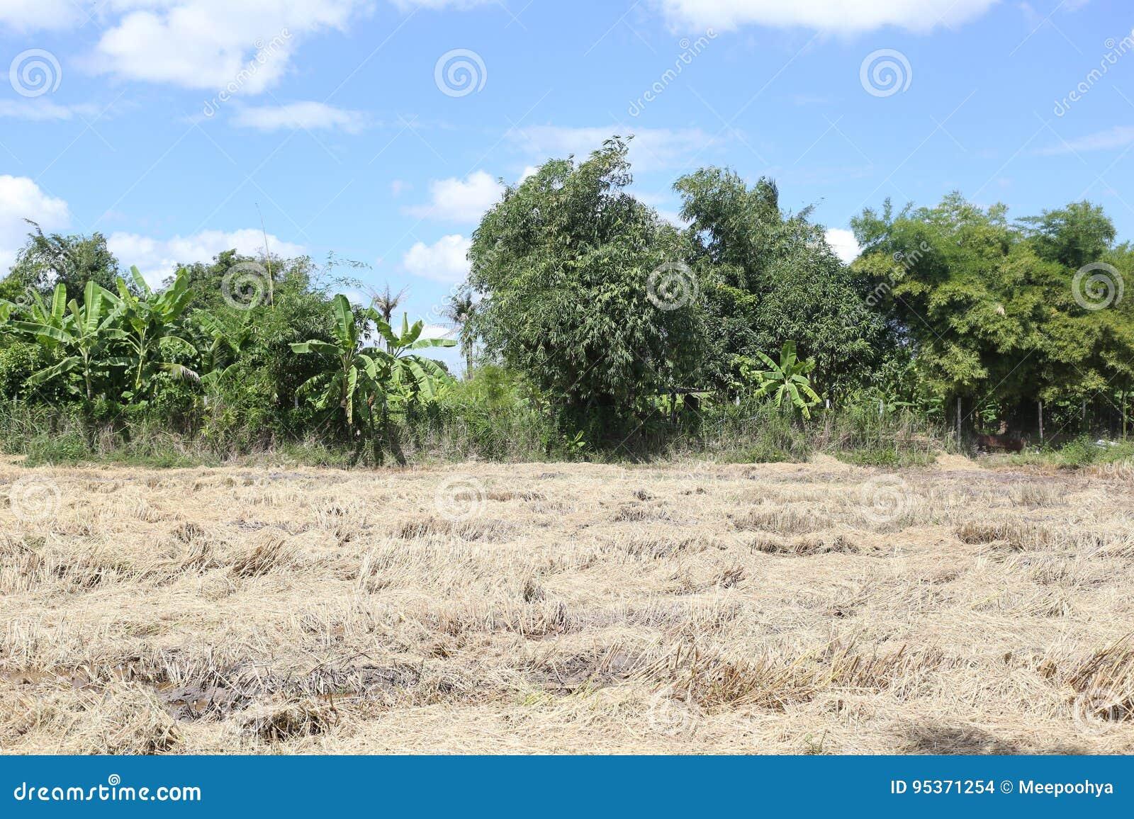 Prados secos del bosque tropical en Tailandia