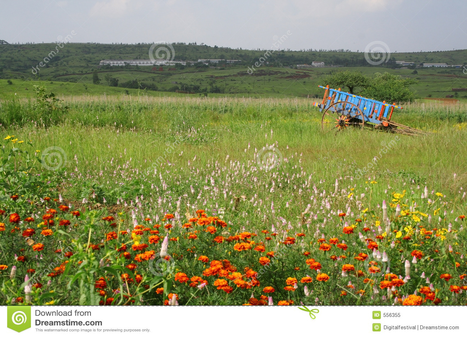 Prados y flores en la India rural escénica