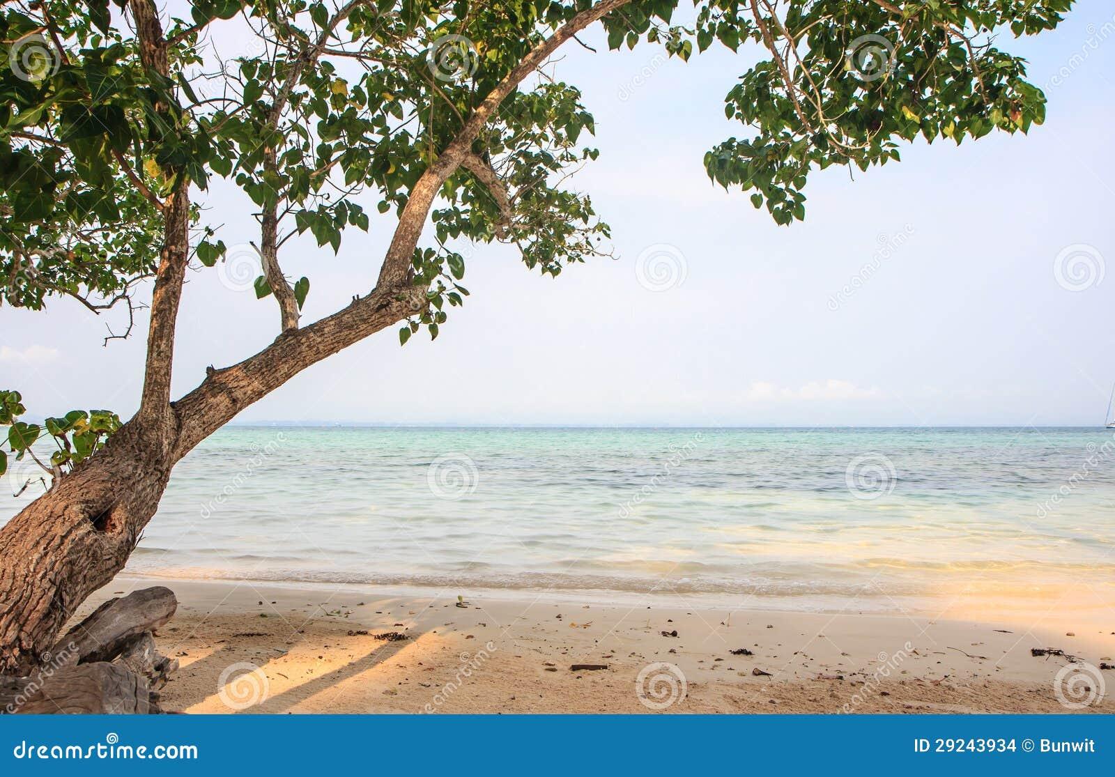 Download A praia foto de stock. Imagem de oceano, praia, verão - 29243934