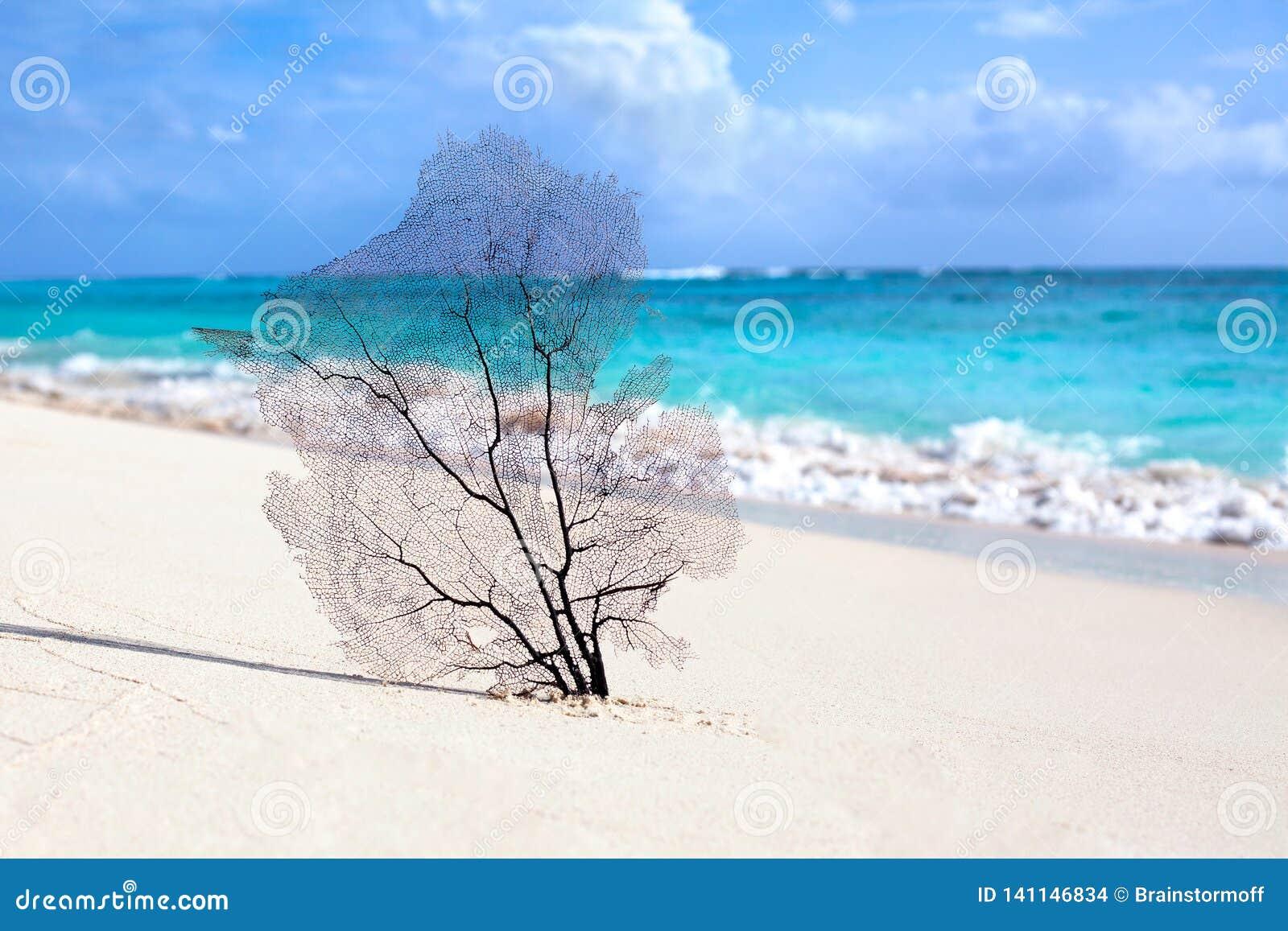 Praia branca da areia, mar de turquesa no céu azul com fundo branco das nuvens