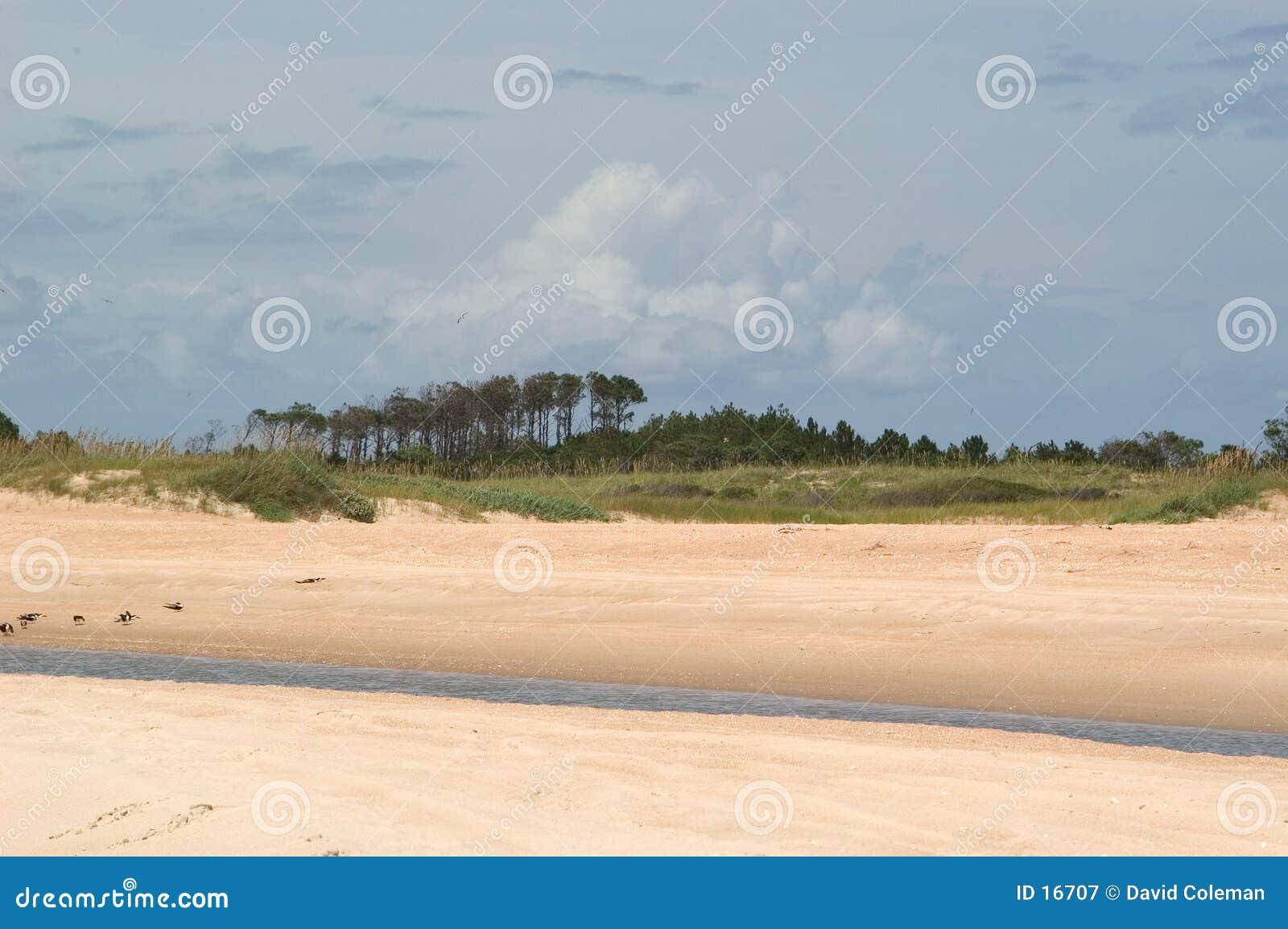 Praia com árvores e o córrego maré