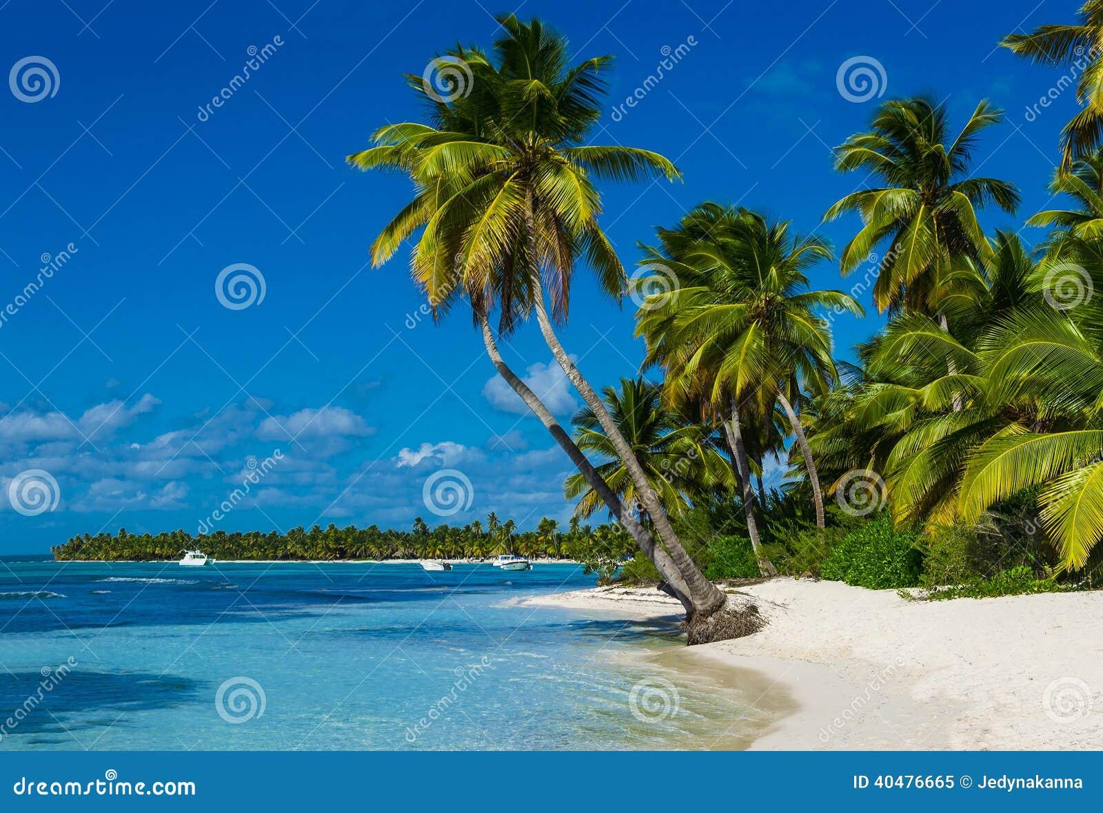 Praia com muitas palmas e areia branca