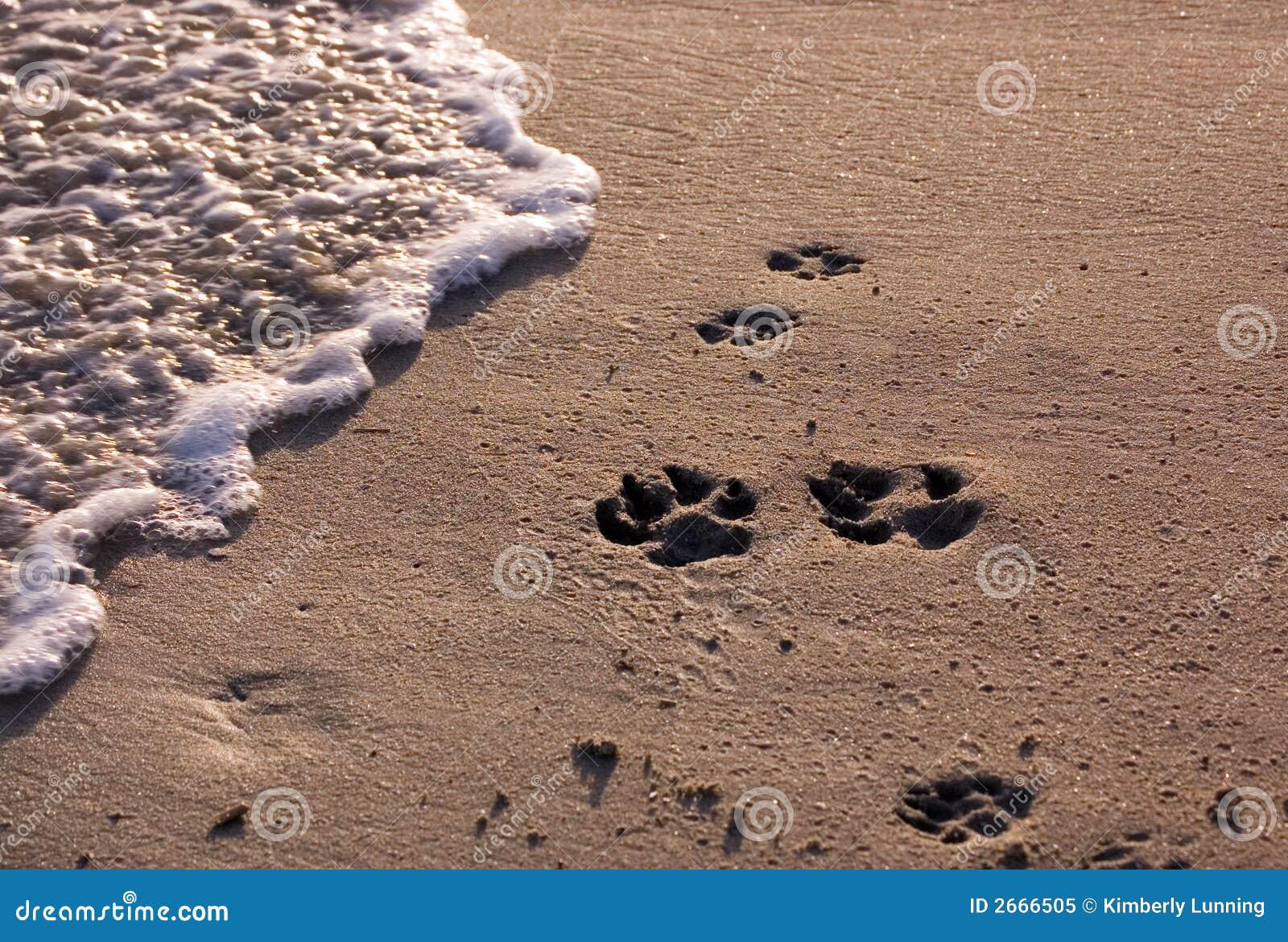 Praia com pawprints do cão