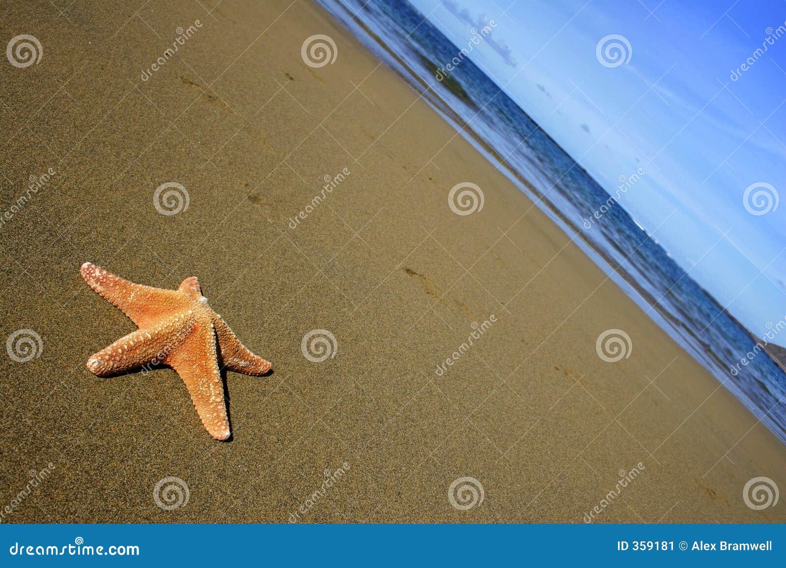 Praia com Starfish